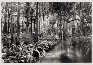 Loxahatchee-River-2