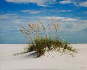 michaelsmith-sand-dune-santa-rosa-island